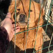 Tierschutz Bernadette sucht ein Zuhause