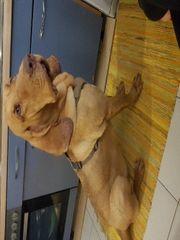 Ferienplatz für unsere liebe Bloodhoundhündin
