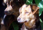 Junghund Sandro sucht