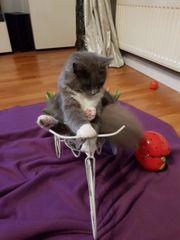 Katze Babys