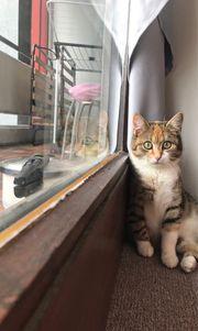 Kiara sucht neues Heim