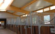 Suche Pferdepfleger Stallhilfe