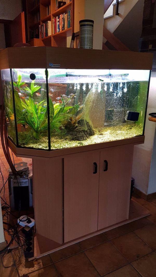 aquaristik in ettlingen bei deinetierwelt. Black Bedroom Furniture Sets. Home Design Ideas