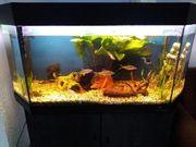 240l Aquarium komplett