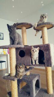 Kitten alarm????
