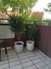 Verschiedene große Zimmerpflanzen