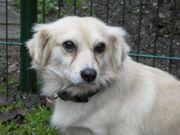 Hund Aron sucht neues Körbchen