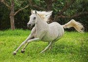 Pferdehaftpflicht kostenlos vergleichen