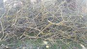 Feinstes Nussbaum Brennholz abzugeben