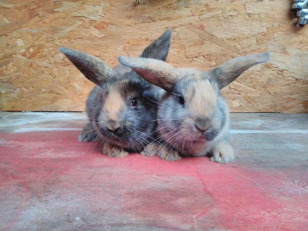 Hasen Kaninchen Babys Jungtiere In Backnang Kleintiere Kaufen Und Verkaufen 252 Ber Private