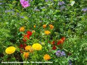 Blühwiesenmischungen