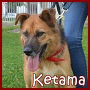KETAMA - *NOTFALL* liebenswerte