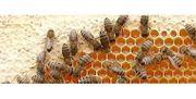 Imkerei Zubehör Bienenvölker