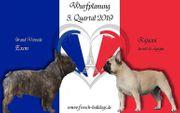 Französische Bulldoggen Wurfplanung 2019
