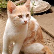 Katzenmädchen Liana möchte sich in