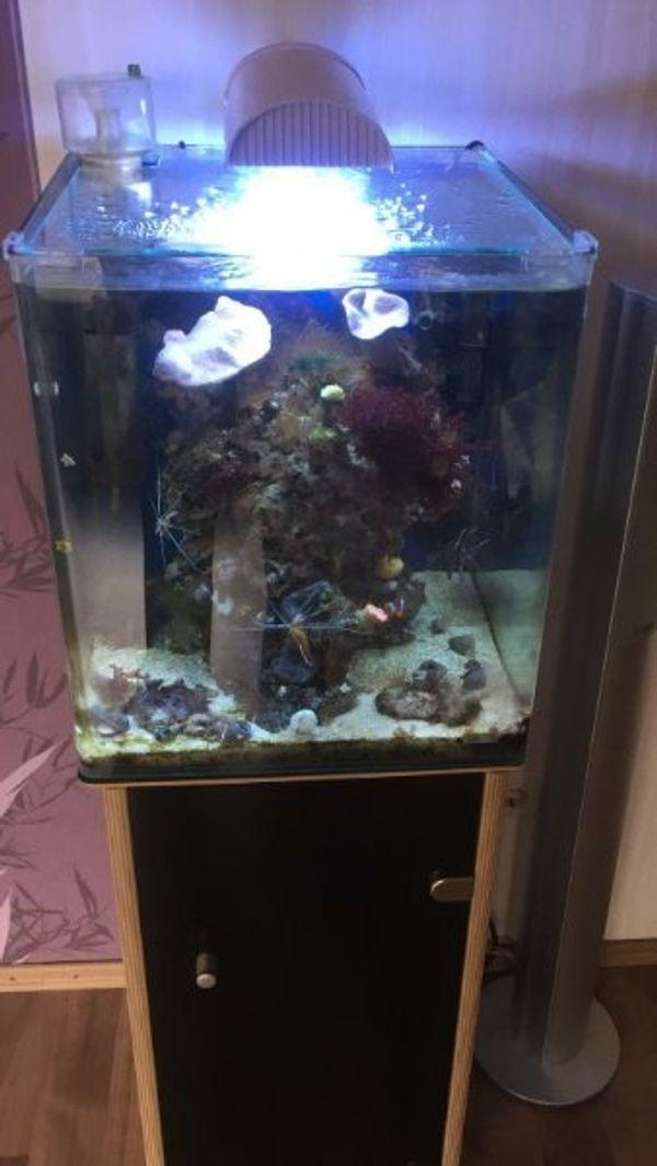 Offen Aquarium Zubehör Gebraucht Fische & Aquarien