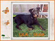 Lila-Olga* muss