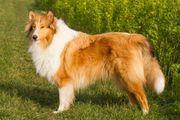 TiPSY- Hundeschule und Seminare SPEZIELL