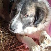 Tierschutz Ylvie sucht ein Zuhause