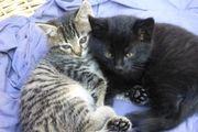 süße Katzenbabys zu