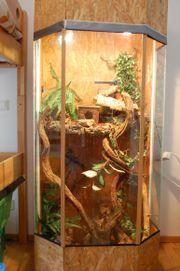 Terrarium / Hochterrarium - Schlangen,