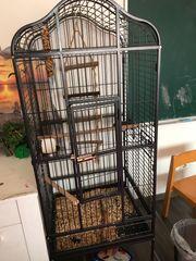 Grau Papagei mit Käfig und