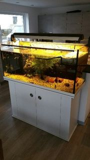 Aquaterrarium für Wasserschildkröten