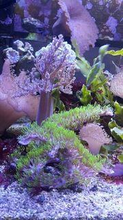 Verschiedene Korallen und