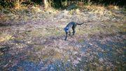 Suche Hundebetreuung Tierbetreuung für 14