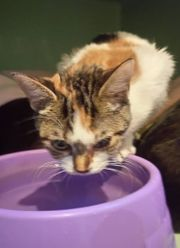 Katze Thelma sucht ein liebevolles