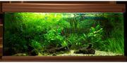 240l Aquarium Aquatlantis silbergrau