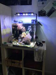 Meerwasseraquarium Dennerle Cube 60l