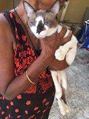 Katze Sunny und Happy zu