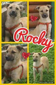 Süßer Rocky sucht nette Familie