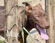 Max Rüde aus dem Tierschutz
