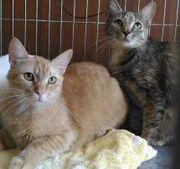 Katzen: Scheues Geschwisterpaar