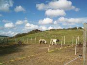 Zwei SHETTY-Ponys