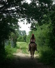 Reitbeteiligungen Pferde gesucht