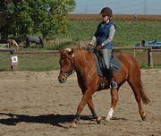 Erwachsene Reiterin sucht Reitbeteiligung RB