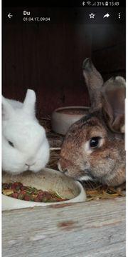 2 Kaninchen suchen ein neues