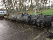 Mooreichenstamm Mooreiche subfossiles Holz ca