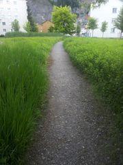 Rasen mähen und