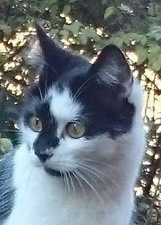 Katze vermisst - Luke