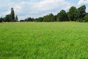 Suche Grünland landwirtschaftliche Nutzfläche zu