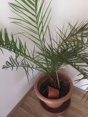 Pflanze zu verkaufen