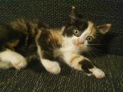 Katzenbaby Babykatze