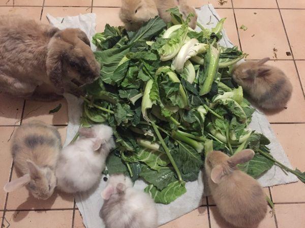 Notverkauf - Kaninchen abzugeben - » Kleintiere