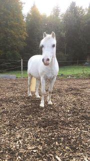 Pony sucht Beschäftigung