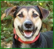 Roxine - Mischling - 3 Jahre - Tierhilfe