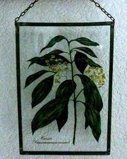 Fensterbild mit schhönem Heilpflanzenmotiv